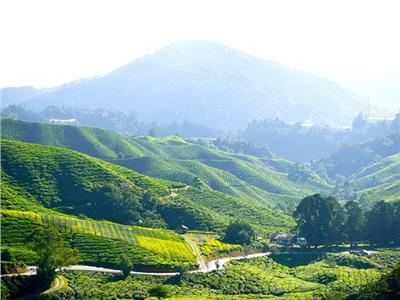 湘益茯茶盛装亮相第11届中国(深圳)国际茶产业博览会